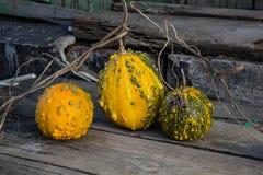 Ainda vida com abóboras de outono em uma tabela de madeira velha Imagens de Stock Royalty Free
