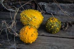 Ainda vida com abóboras de outono em uma tabela de madeira velha Fotografia de Stock Royalty Free