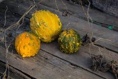 Ainda vida com abóboras de outono em uma tabela de madeira velha Foto de Stock Royalty Free