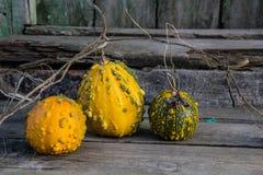 Ainda vida com abóboras de outono em uma tabela de madeira velha Foto de Stock