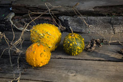 Ainda vida com abóboras de outono em uma tabela de madeira velha Fotos de Stock