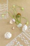 Ainda vida com alho, botões e flores no desenho de papel com toalha Imagem de Stock Royalty Free