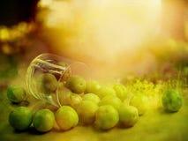 Ainda vida com as ameixas no dia ensolarado Fotos de Stock Royalty Free