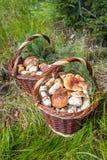 Ainda vida com as duas cestas de vime dos cogumelos Foto de Stock Royalty Free