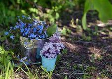 Ainda vida com as flores do miosótis e grupo azuis dos lilás nas cubetas pequenas Foto de Stock Royalty Free