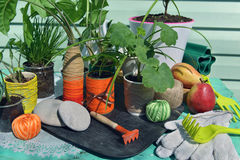 Ainda vida com as plantas verdes home fora na luz solar Imagens de Stock Royalty Free