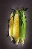 Ainda vida com as três orelhas de milho indiano Fotografia de Stock Royalty Free
