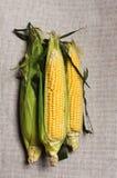 Ainda vida com as três orelhas de milho indiano na lona de f Foto de Stock