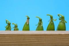 Ainda vida com as vagens de ervilha verde Fotos de Stock