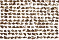 Ainda-vida com cabeças dos peixes Foto de Stock