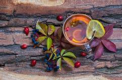 Ainda vida com chá quente das folhas de outono do dogrose e do limão Foto de Stock