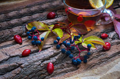 Ainda vida com chá quente das folhas de outono do dogrose e do limão Imagem de Stock Royalty Free