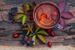 Ainda vida com chá quente das folhas de outono do dogrose e do limão sobre Imagem de Stock Royalty Free