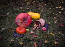 Ainda a vida com colheita Dia das Bruxas do outono das abóboras na grama do tha, folhas de queda, nozes, selvagens aumentou, uvas Imagem de Stock