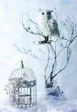Ainda vida com coruja Fotografia de Stock Royalty Free