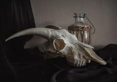 Ainda vida com crânio da ram e a garrafa velha na obscuridade Imagem de Stock Royalty Free