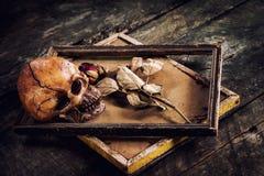 Ainda a vida com crânio e as rosas humanos secou em uma moldura para retrato Fotografia de Stock