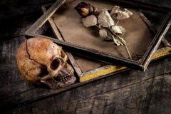 Ainda a vida com crânio e as rosas humanos secou em uma moldura para retrato Fotografia de Stock Royalty Free
