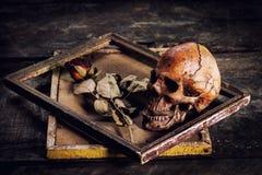 Ainda a vida com crânio e as rosas humanos secou em uma moldura para retrato o Imagens de Stock