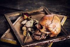 Ainda a vida com crânio e as rosas humanos secou em uma moldura para retrato o Fotos de Stock