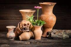 Ainda vida com crânio e o vaso humanos, Foto de Stock Royalty Free