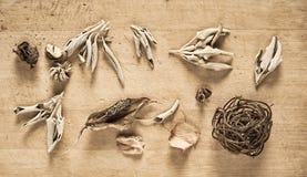 Ainda vida com ervas secas Imagem de Stock Royalty Free