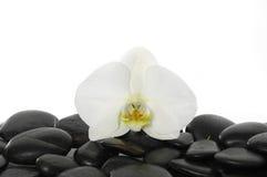 Ainda vida com flor bonita Imagem de Stock Royalty Free