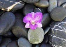 Ainda vida com flor bonita Imagens de Stock Royalty Free