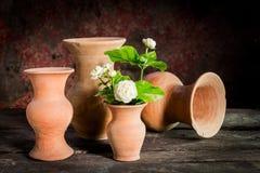 Ainda vida com a flor do jasmim no vaso Imagens de Stock Royalty Free