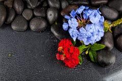Ainda vida com flores e as pedras pretas Fotografia de Stock Royalty Free