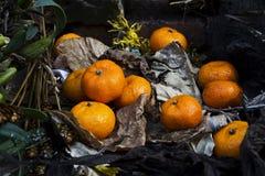 Ainda vida com fruta Fotografia de Stock