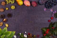 Ainda vida com frutos e morangos - maçãs, ameixas, uva, peras, folhas, cones do pinho, figos, flores, castanhas Imagens de Stock