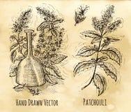 Ainda vida com a garrafa do patchouli e de perfume Foto de Stock Royalty Free