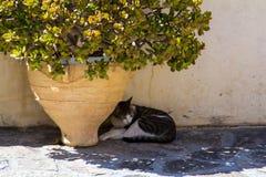 Ainda vida com gato Imagem de Stock Royalty Free