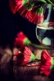 Ainda vida com Gerberas vermelho Imagem de Stock Royalty Free