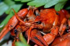 Ainda vida com lagostins fervidos Foto de Stock Royalty Free