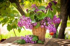 Ainda vida com lilac Fotografia de Stock