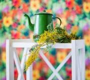 Ainda vida com mimosa da mola Fotografia de Stock Royalty Free