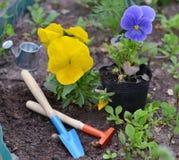Ainda vida com o amor perfeito amarelo e violeta, ferramentas de jardim bonitos no canteiro de flores Fotografia de Stock