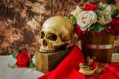 Ainda vida com o crânio humano com rosa do vermelho e rosa do branco Imagem de Stock