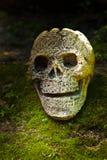 Ainda vida com o crânio na floresta Imagem de Stock