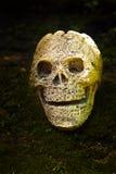 Ainda vida com o crânio na floresta Fotografia de Stock Royalty Free