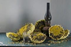 Ainda vida com o girassol das sementes de girassol Fotografia de Stock
