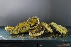 Ainda vida com o girassol das sementes de girassol Imagem de Stock Royalty Free