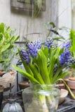 Ainda vida com o jacinto em torno da coleção do cacto e das plantas carnudas Imagens de Stock Royalty Free