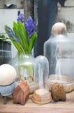 Ainda vida com o jacinto na madeira de armário do vintage no inte rústico Fotografia de Stock Royalty Free