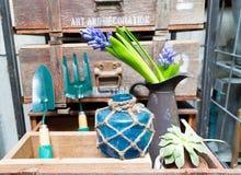Ainda vida com o jacinto na madeira de armário do vintage no inte rústico Fotos de Stock