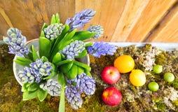 Ainda vida com o jacinto no fundo do musgo, do fruto e da madeira em Imagens de Stock Royalty Free