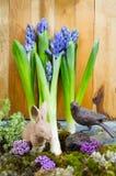 Ainda vida com o jacinto no fundo do musgo e da madeira em r rústico Fotografia de Stock Royalty Free