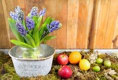 Ainda vida com o jacinto no fundo do musgo e da madeira, fruto em h Fotografia de Stock Royalty Free